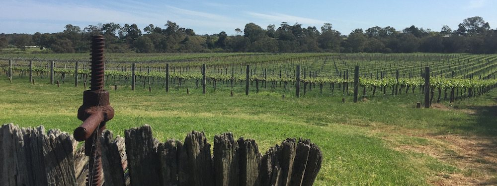 Book Swan Valley Wine Tours