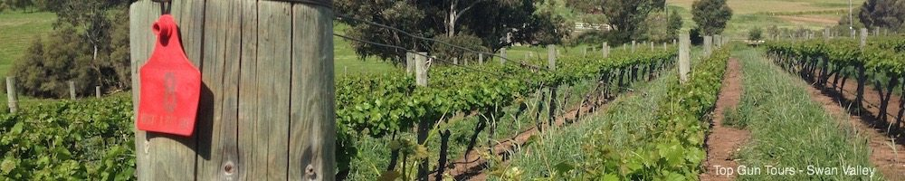 wine tasting tours, perth swan valley