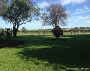 over looking the vines at swanbrook winery