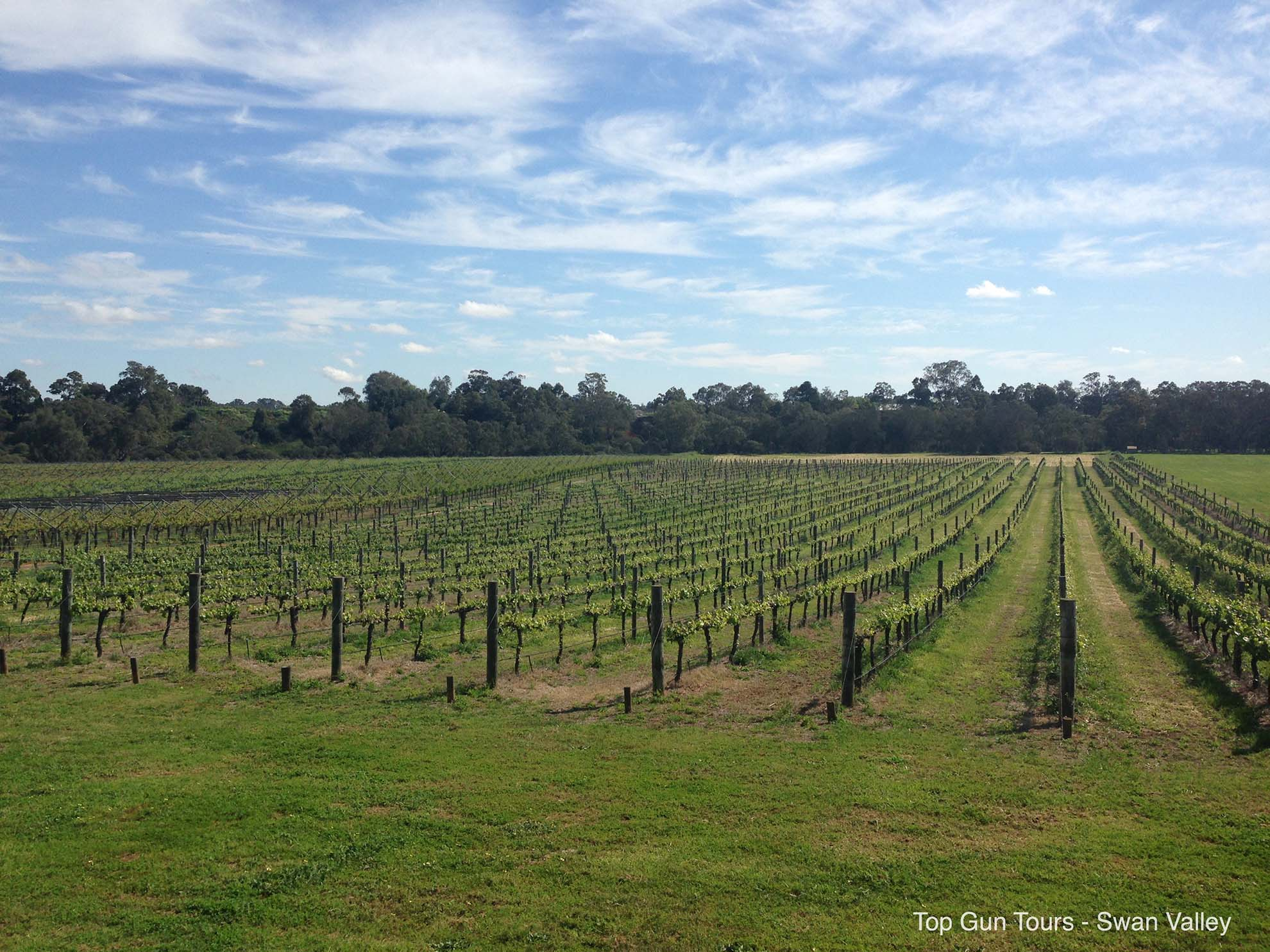 We Offer Wine Amp Bus Tours To Entopia Wines In Swan Valley