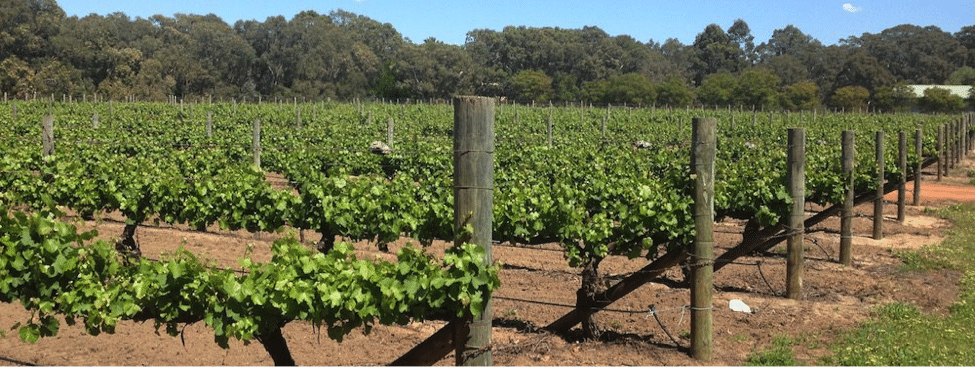 wineries swan valley